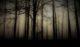 Δάσος με πυκνά δέντρα και ομίχλη